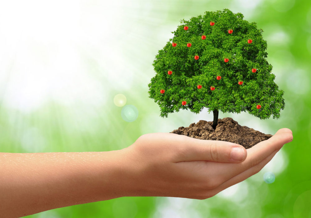 The Orange Tree- Why Helping Yourself Helps Those Around You